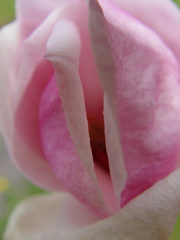 flowervagina